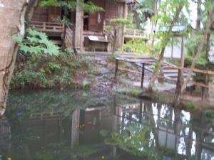 中尊寺菊祭り2013-10-26-121