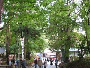 中尊寺菊祭り2013-10-26-120
