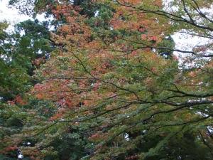 中尊寺菊祭り2013-10-26-119