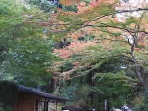 中尊寺菊祭り2013-10-26-118