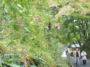 中尊寺菊祭り2013-10-26-117