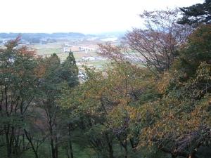 中尊寺菊祭り2013-10-26-126