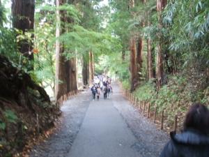 中尊寺菊祭り2013-10-26-125