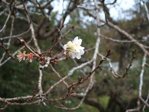 新波神社例大祭2013-11-03-140