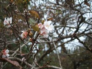 新波神社例大祭2013-11-03-142