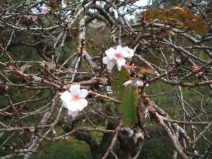 新波神社例大祭2013-11-03-141