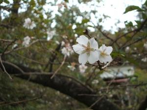 新波神社例大祭2013-11-03-152
