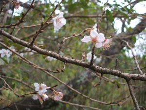 新波神社例大祭2013-11-03-151