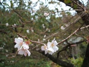 新波神社例大祭2013-11-03-150