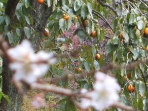 新波神社例大祭2013-11-03-148