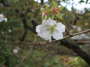 新波神社例大祭2013-11-03-157