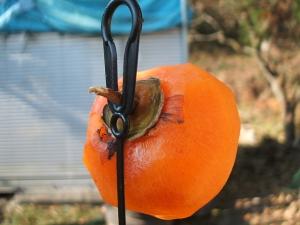 新型干し柿ヒモ。9