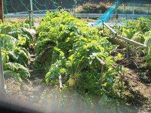 菜園2013-11-17-009