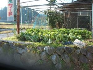 菜園2013-11-17-005