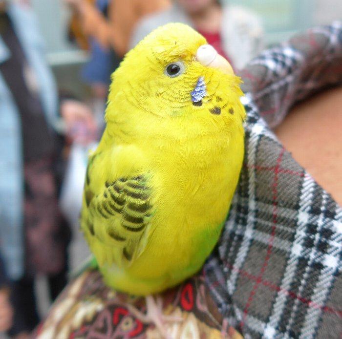 鳥おばさん