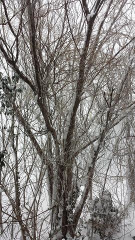 吹雪20140205_154629