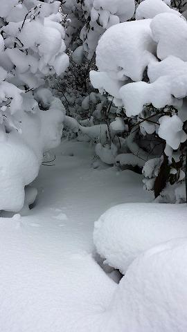 雪2014935