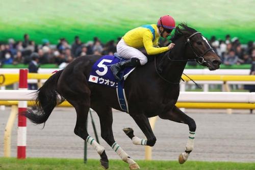 【競馬】今後GⅠ8勝以上できる馬は現れるのか?