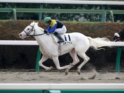 【競馬】牝馬らしい可愛い馬名を考えるスレ
