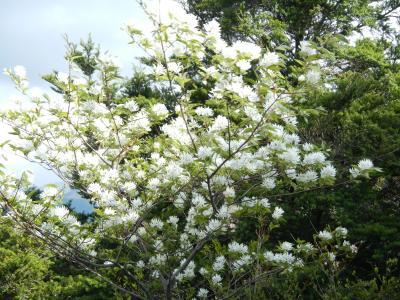 11白い花