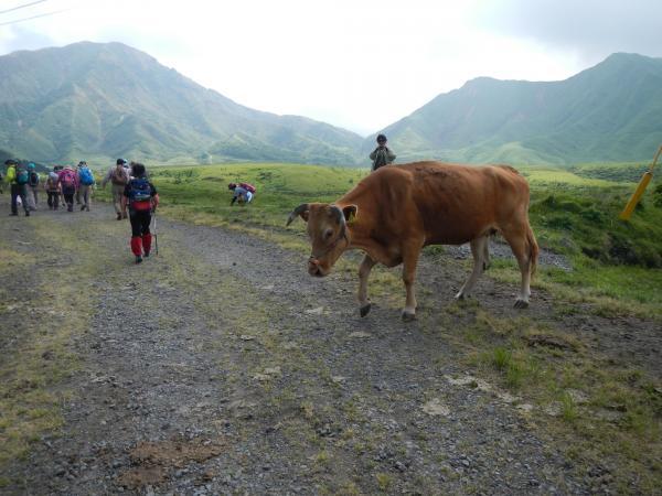 2牛さん優先