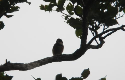 0915小鳥