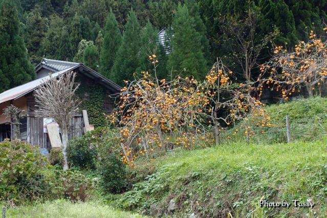 柿の木と小屋