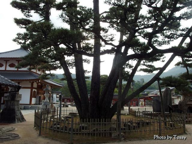 大願寺 九本松