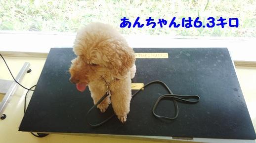 あんちゃん6.3キロ