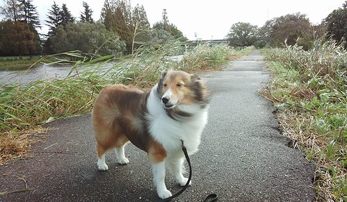 台風で風が強い