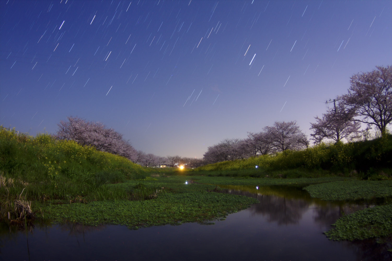 草場川の桜並木の星景