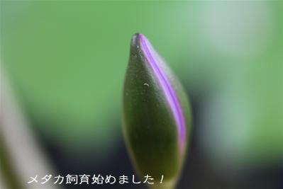 IMG_1792.jpg