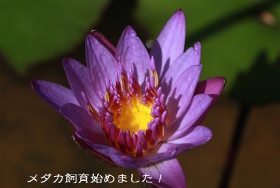 IMG_4468_20130930100450843.jpg