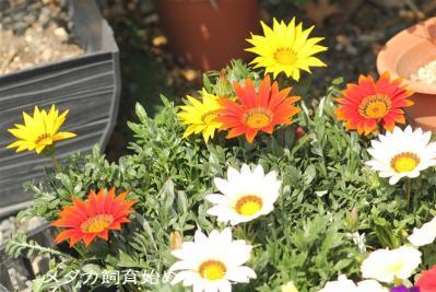 IMG_7247.jpg