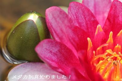 IMG_7810.jpg