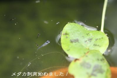 IMG_8810.jpg