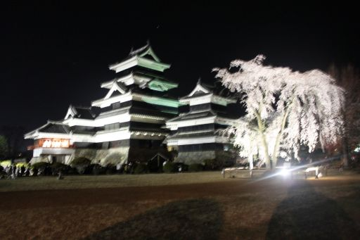 yozakurasiro_512.jpg