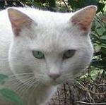 ブログ中年 駄猫☆チャンプル