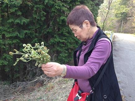4182013野呂山蕨S1