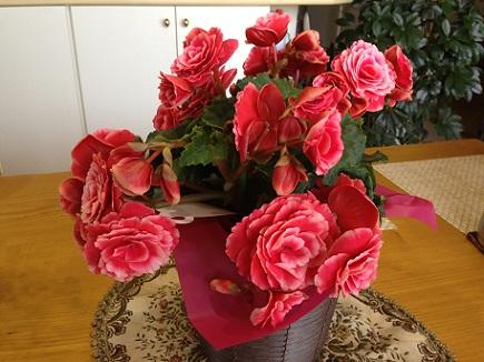 5122013母の日娘から花S