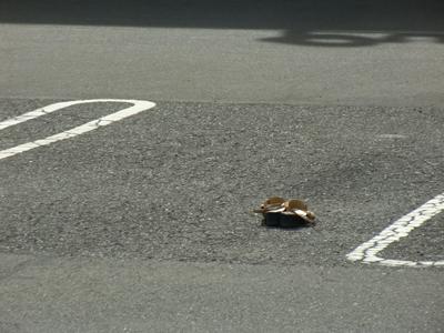 哀愁が漂い過ぎてる駐車場に残された履物
