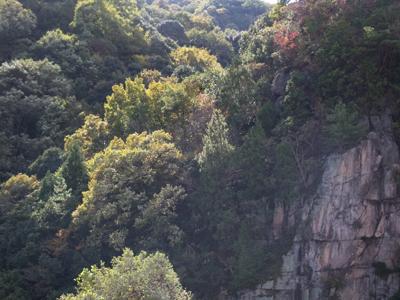 秋の山に見とれ車をとめて撮影