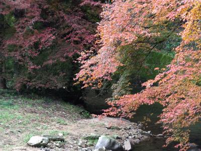 紅葉が眩しい佛通寺川