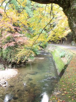 澄み切った秋の佛通寺川清流