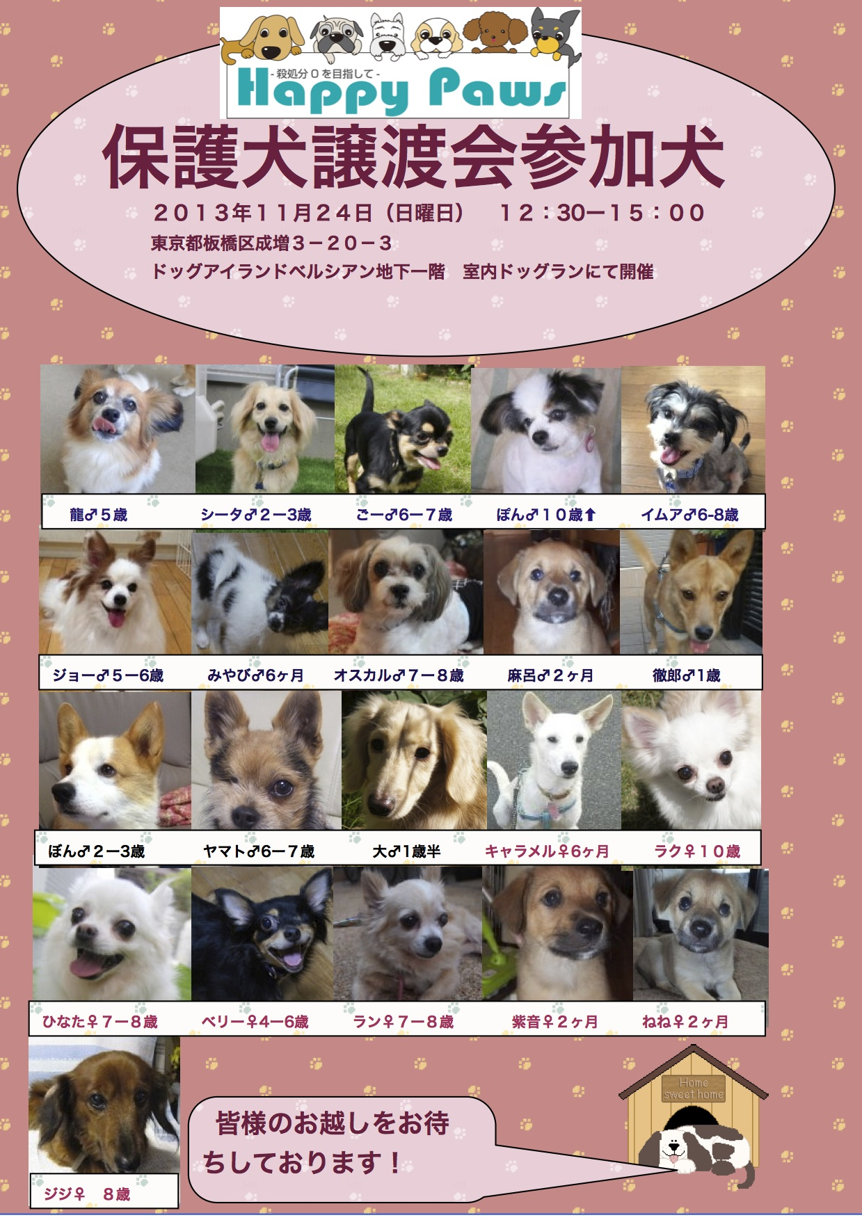 20131124里親会参加犬