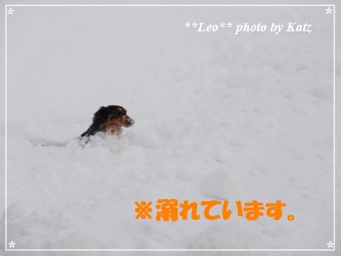 20130310 Leo (7)