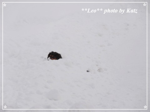 20130310 Leo (9)