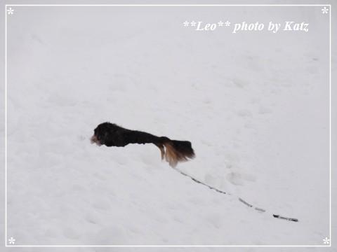 20130310 Leo (10)