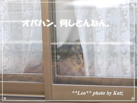 20130406 Leo (1)