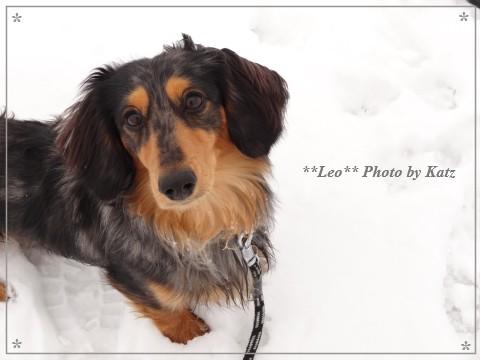 20130317 Leo (1)